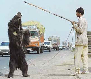 In India, Ursine Rights Finally Brought to Bear: The End