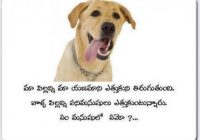 telugu funny dog messages.. ~ Telugu Jokes Telugu Cartons ..